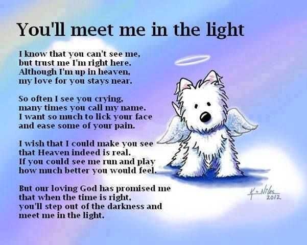When one of our dogs passes over rainbow bridge we get comfort from